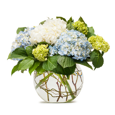Same Day Flower Delivery - Stunning Hydrangea