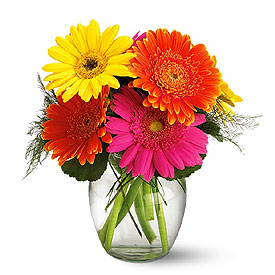 Same Day Flower Delivery - Vase Of Gerbera Daisies
