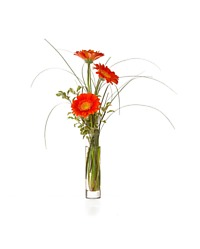 Three Gerbera Vase