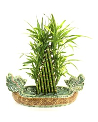 Lucky Bamboo Two Headed Dragon Planter