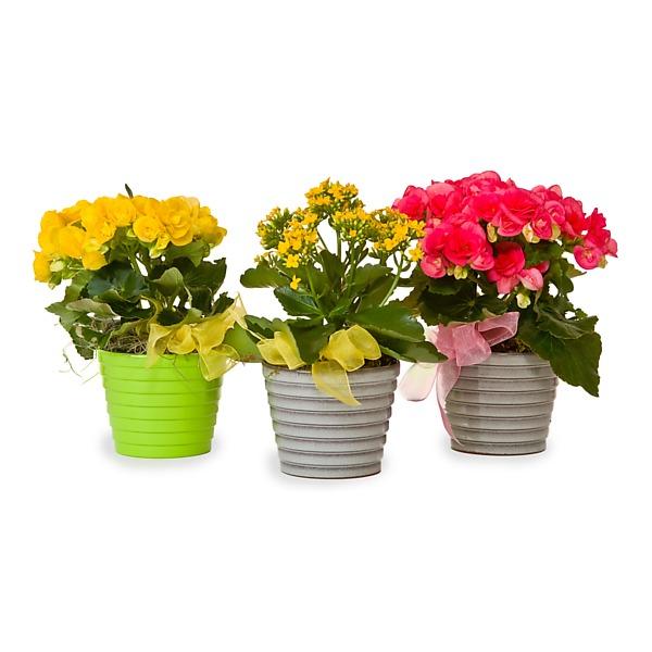 Johnson Florist - Flowers - Under $20 {0,20.00} Selection