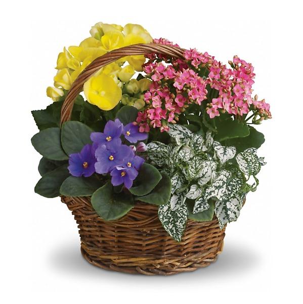 St. Paul Florists - Minneapolis Flowers - A. Johnson & Sons Florist